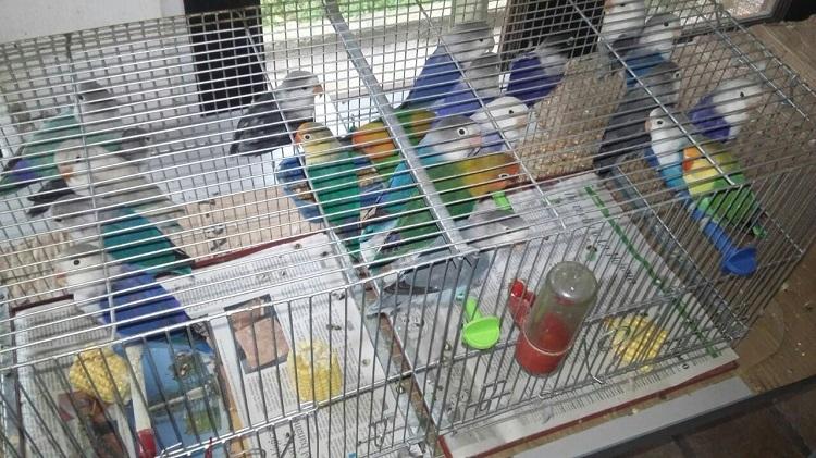 Exposición de Aves Ornamentales en el municipio de Santander de Quilichao