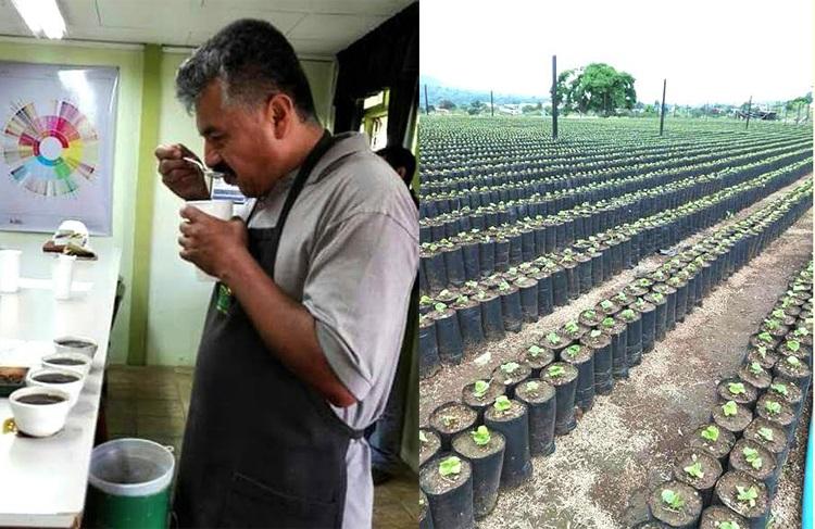 Experiencia cafetera en Costa Rica, enriquece a cultivadores del oriente caucano